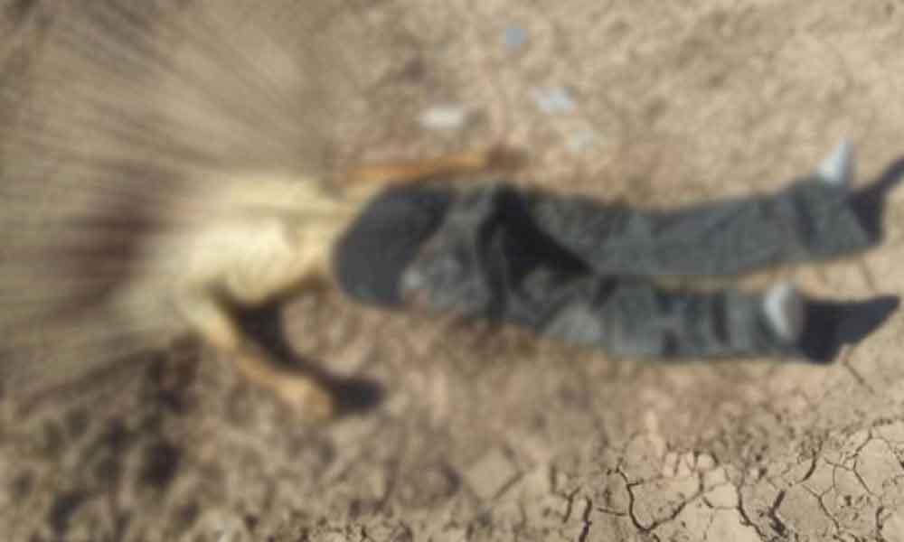 Encuentran un cadáver decapitado en una parcela de Mexicali