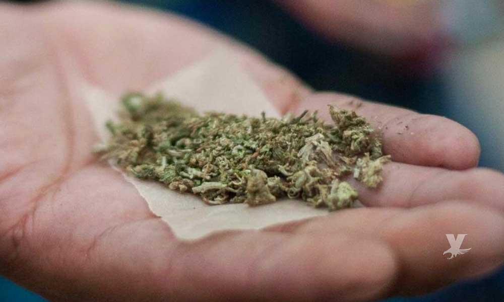 Marihuana previene el envejecimiento del cerebro