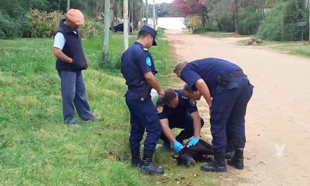 Hombre mata perro de un balazo frente a su pequeño dueño por robar un trozo de carne