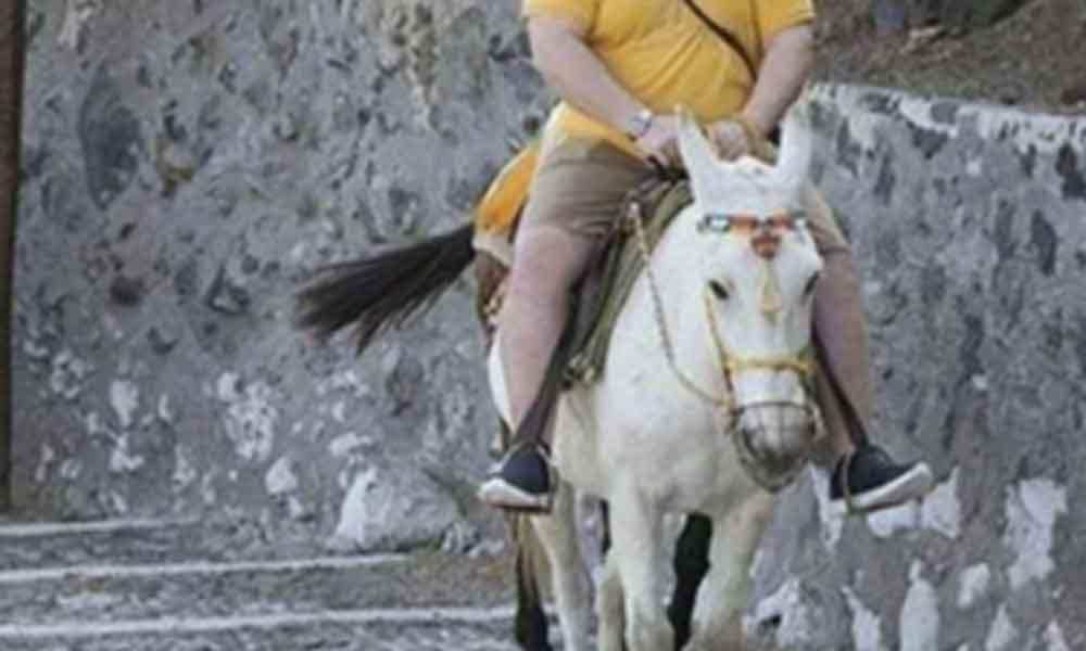 """Prohíben a turistas con sobrepeso usar burros como """"taxis"""""""