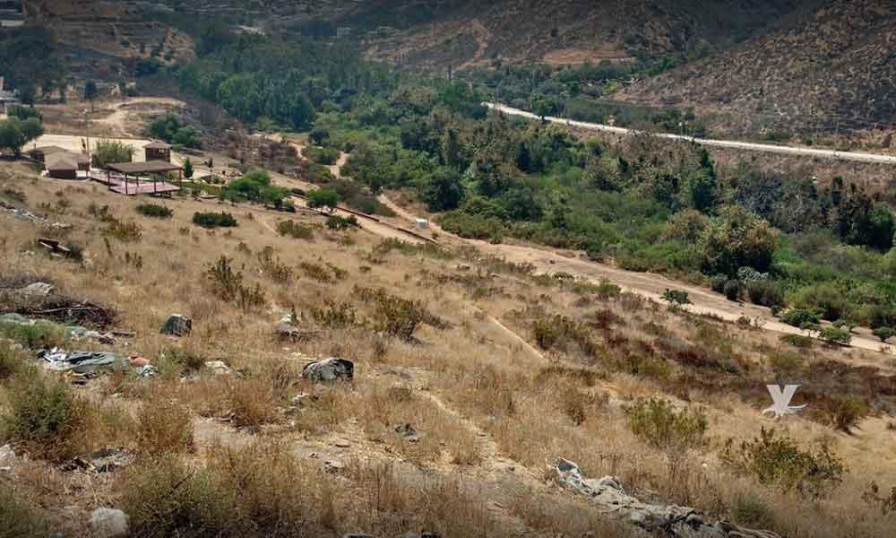 Alerta preventiva en Cañón Doña Petra por presencia de escarabajo barrenador