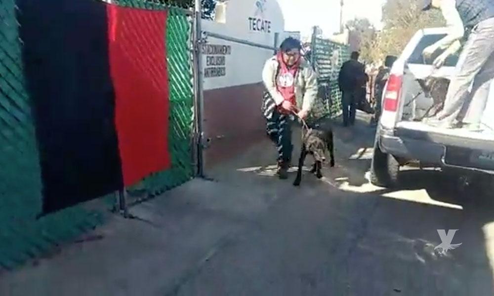 Huelga de sindicalizados deja dos cachorros muertos en el centro antirrábico de Tecate