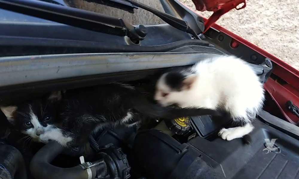 Una pequeña acción puede salvar la vida de las mascotas que se refugian del frío bajo el cofre de los autos