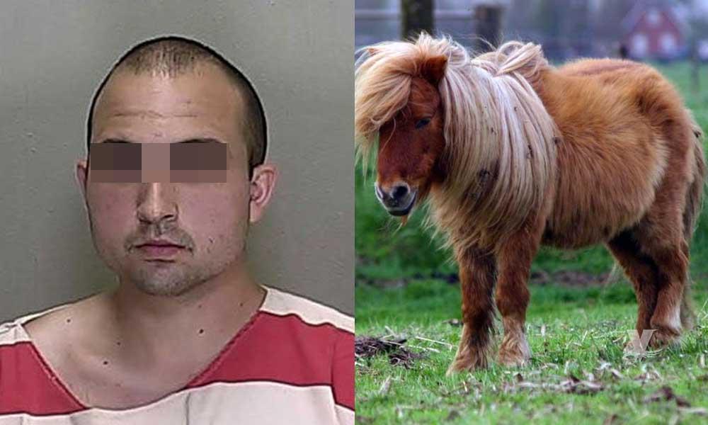 """Detienen a sujeto que abusó en repetidas ocasiones de un """"pony"""""""