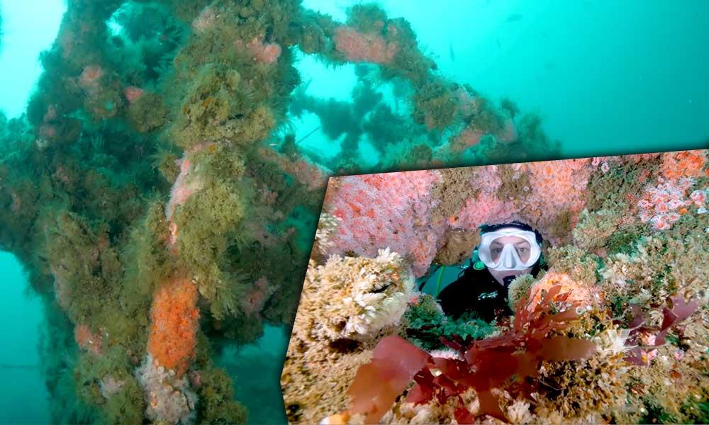 ¡De película! Así luce el parque submarino de Rosarito