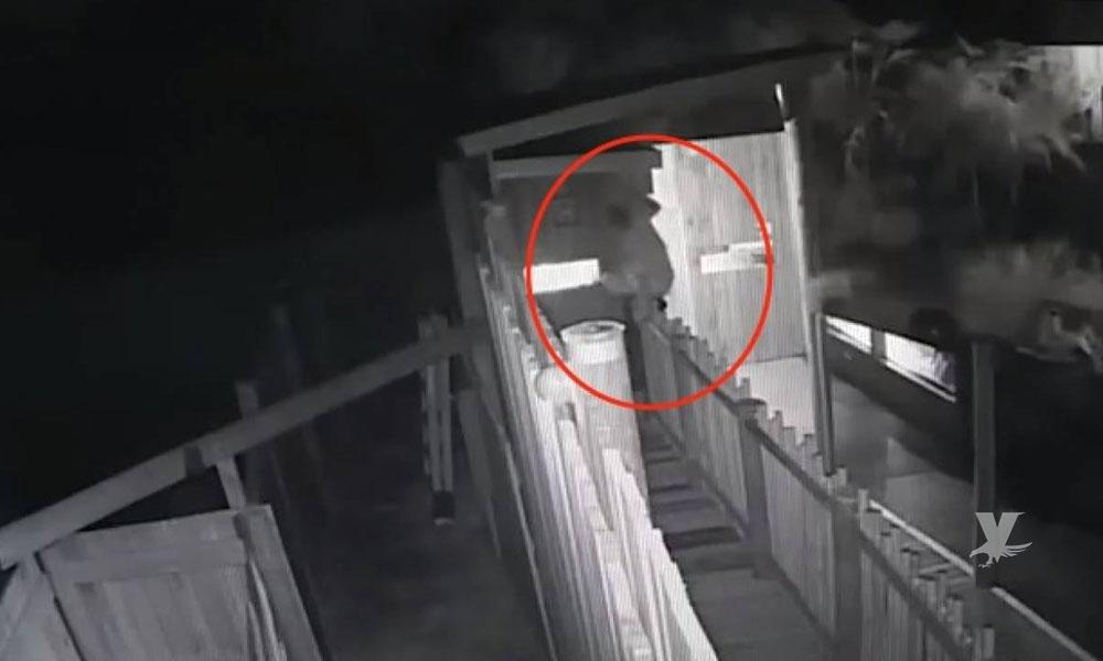 (VIDEO) Hombre presuntamente borracho salta a estanque llenó de cocodrilos