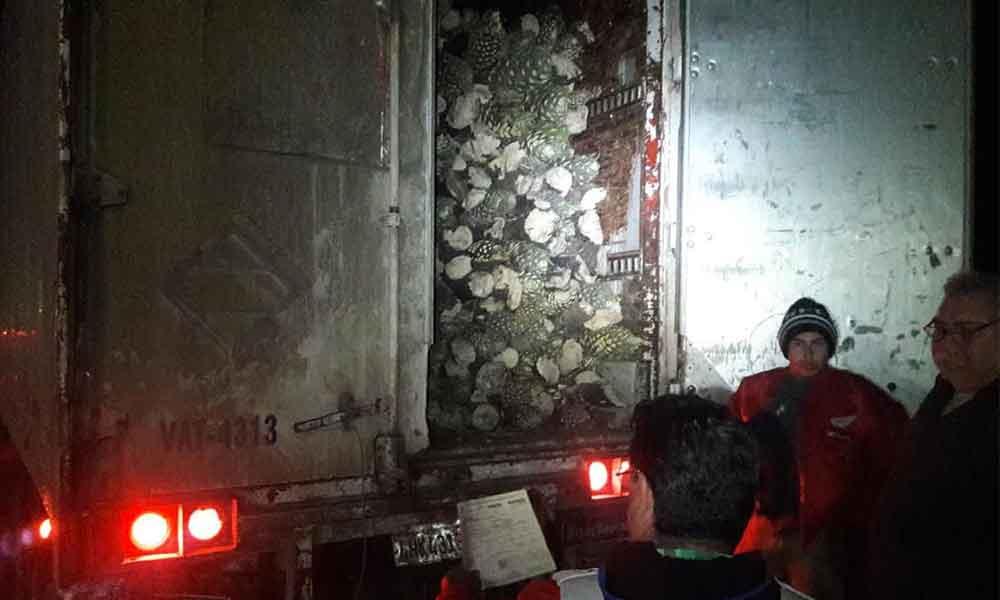 Aseguran 28 toneladas de tallos de Yucca ilegal en Baja California
