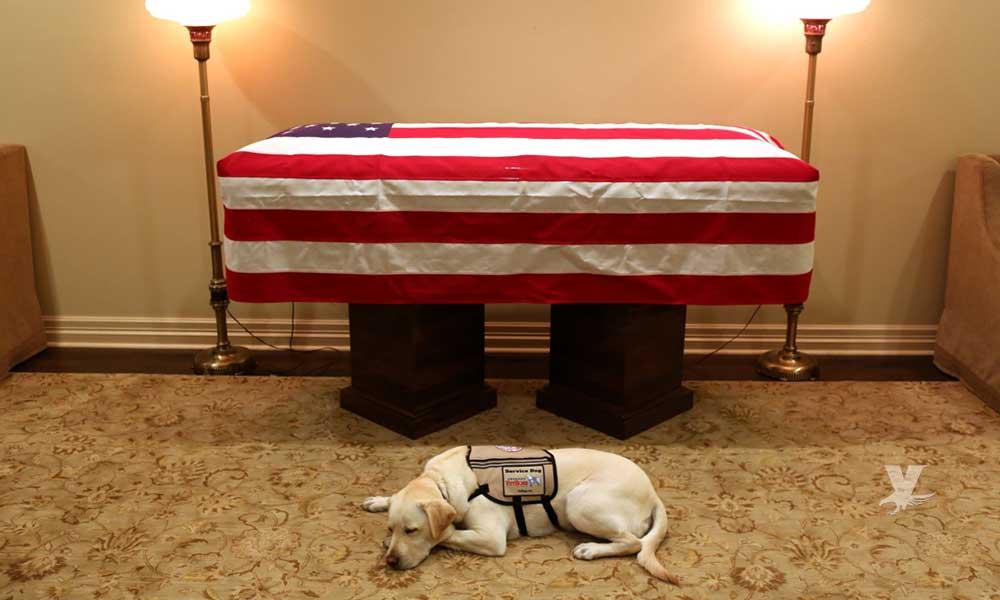El perro de George H. W. Bush no se despega de su dueño ni en el ataúd