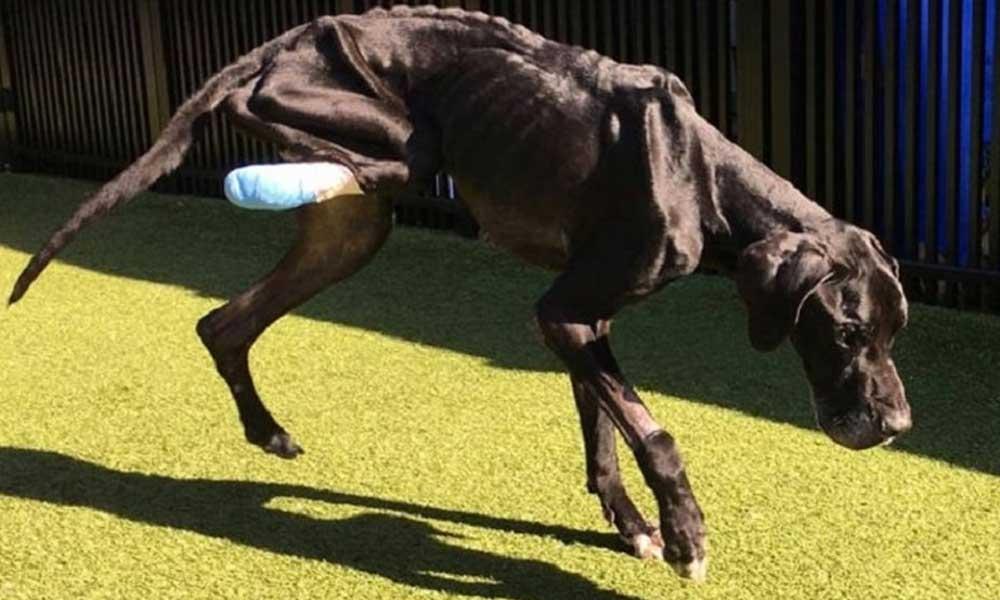 Perro comió su pata para no morir de hambre