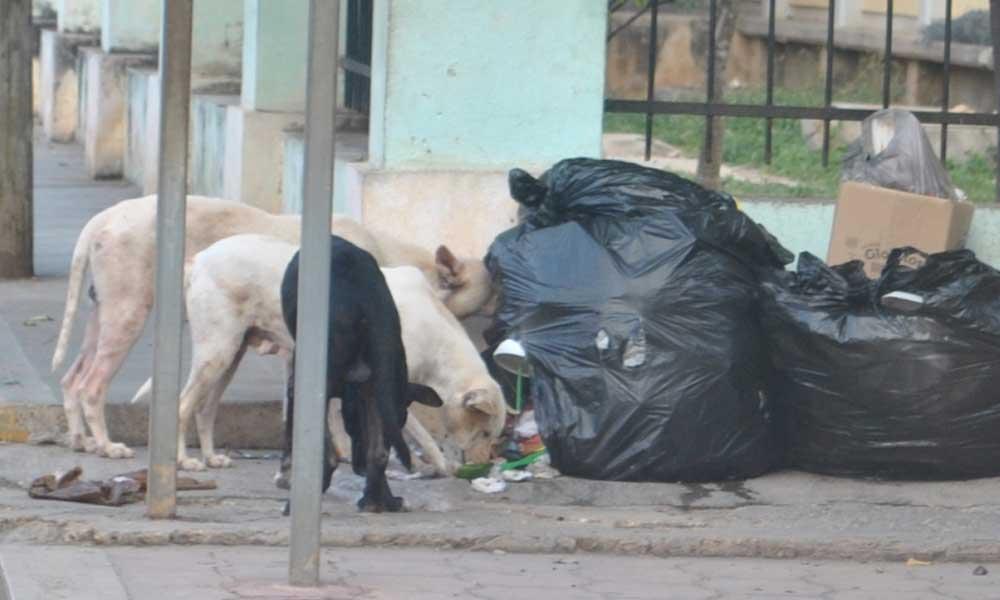 """Aprueban ley para """"matar perros callejeros que estorben el tránsito o busquen comida en bolsas de basura o tambos"""""""