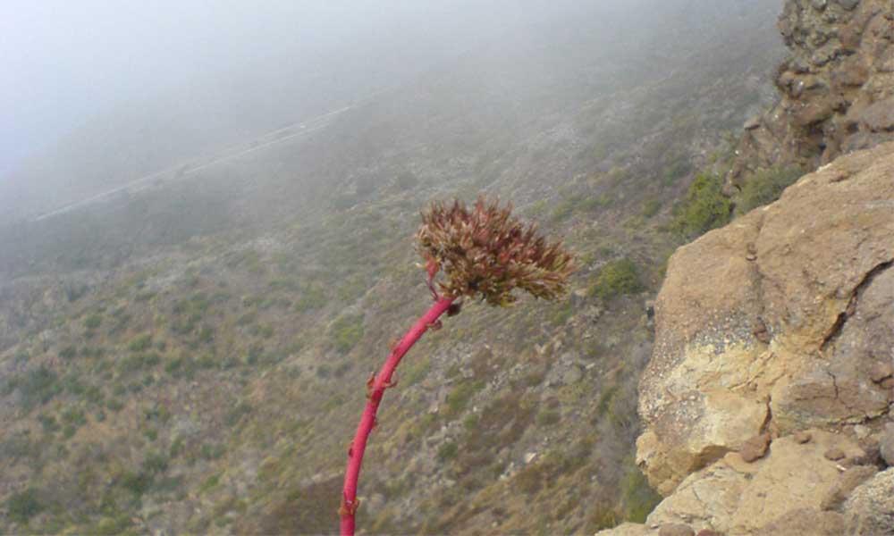 Recolectores de niebla, una alternativa ante las sequía en Baja California