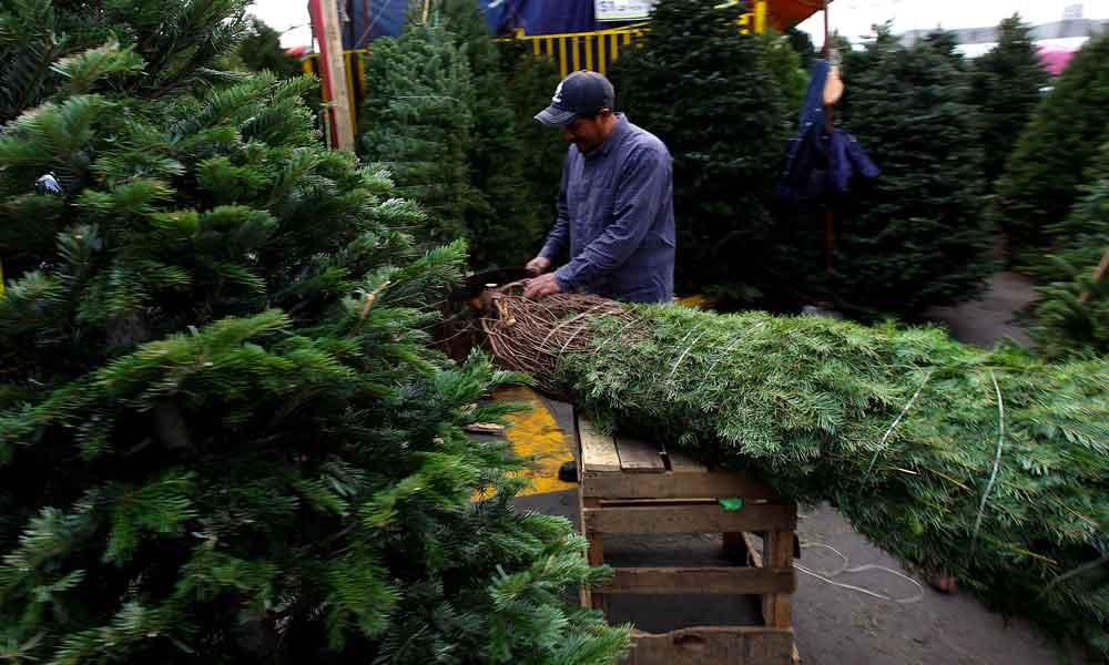 San Diego anuncia los lugares para llevar tu árbol de navidad para su reciclaje