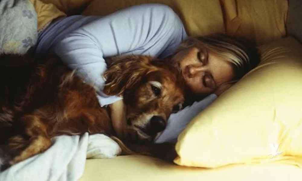 Las mujeres duermen mejor al lado de perros que con seres humanos