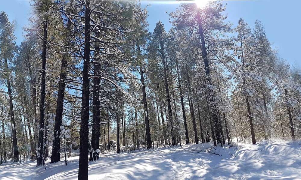 Temperaturas de -5 grados en zonas nevadas de la sierra de Baja California