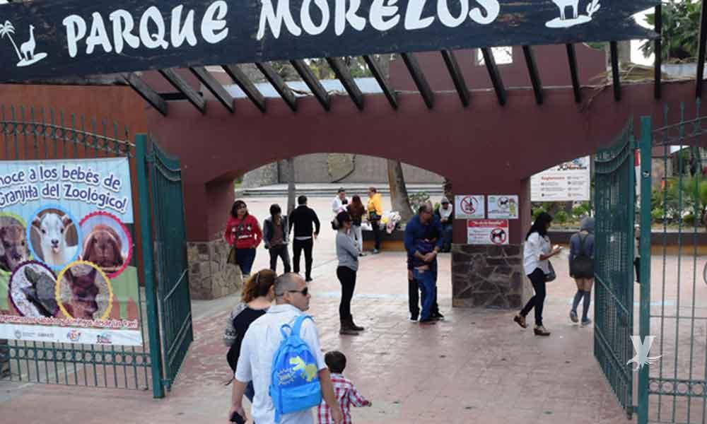 Se escapa leona y evacuan Parque Morelos