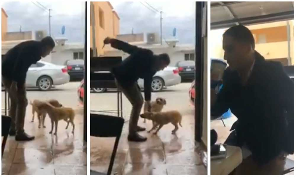 (VIDEO) Hombre apuñala a perro callejero en Coahuila