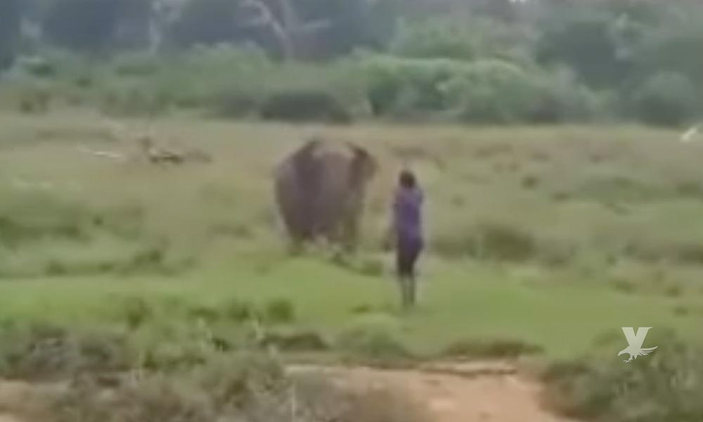 (VIDEO) Elefante pisotea y mata a hombre que intentaba hipnotizarlo