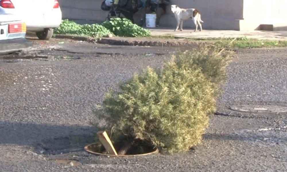 En Ensenada tapan los baches con árboles de navidad