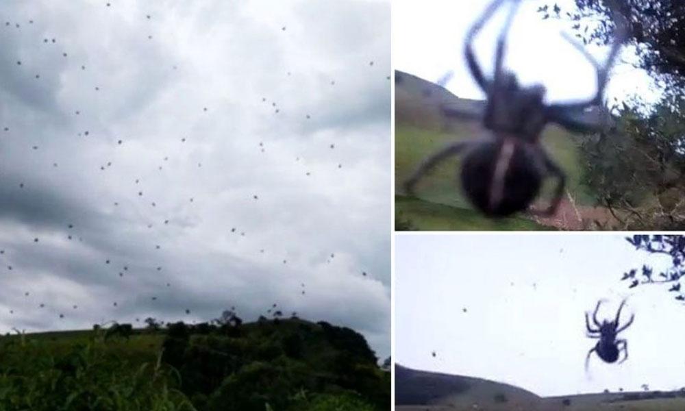 """(VIDEO) Residentes graban impresionante """"lluvia de arañas"""""""