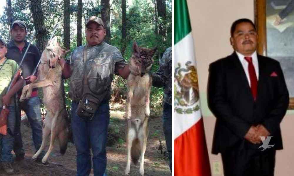 Regidor de Morena es señalado de cazar lobos ilegalmente