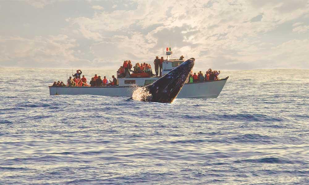 Ballenas, delfines y lobos marinos, invitan al periodo de avistamiento en Ensenada