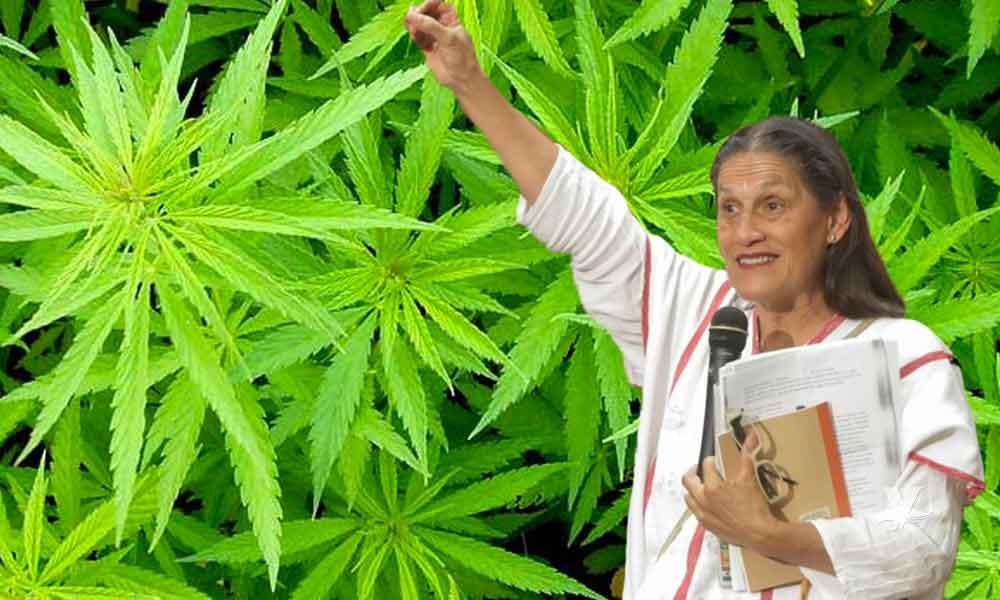 "Senadora de Morena declara que ""la marihuana no es una droga, es una planta sagrada"""