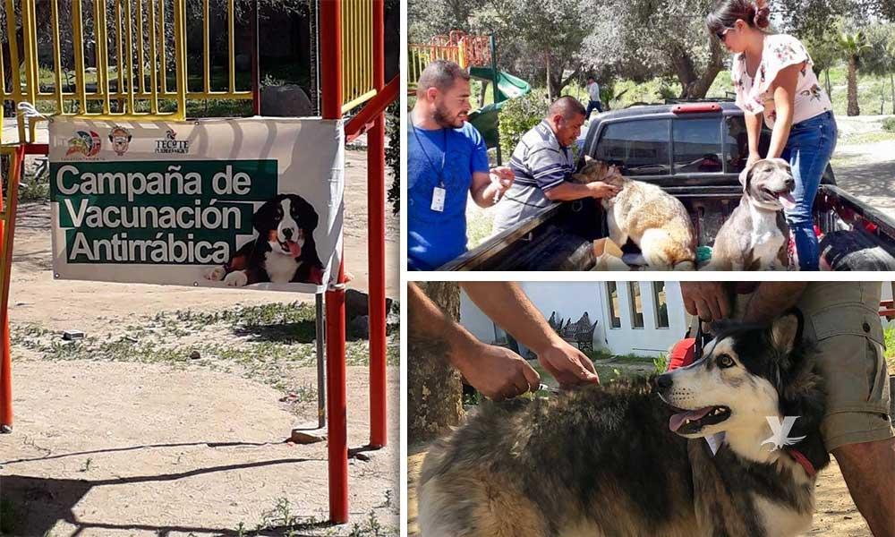 Arrancó la Semana Nacional de Vacunación Antirrábica en Tecate