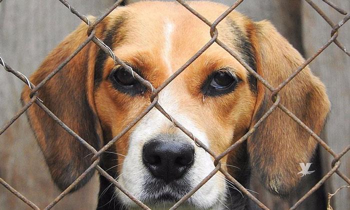 Proponen de seis meses a cuatro años de cárcel a quien maltrate perros de asistencia