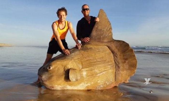 Encuentran pez luna gigante en Australia