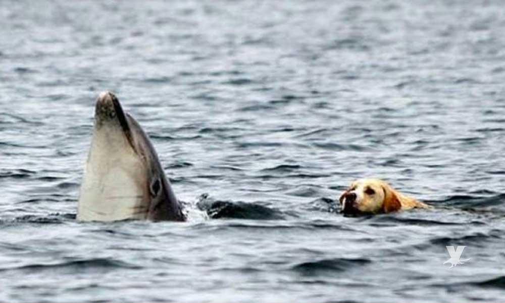 (VIDEO) Perro escapa de su casa todas las mañanas para nadar con su mejor amigo un delfín