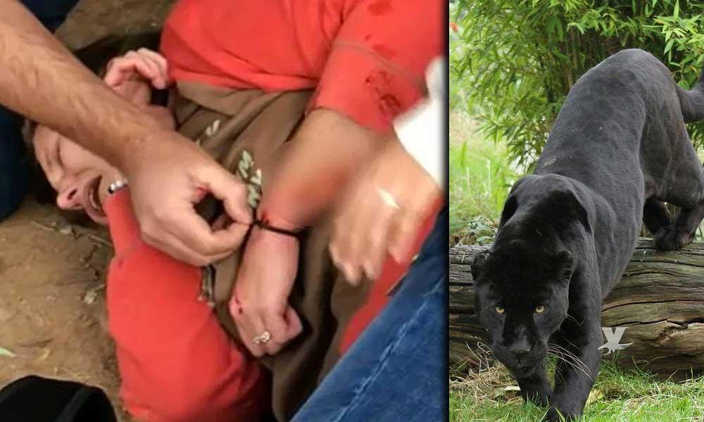 (VIDEO) Mujer ingreso a la jaula de un Jaguar para tomarse una selfie, fue atacada por el animal