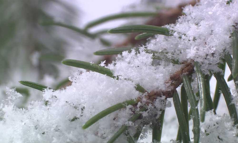 Podría nevar en Baja California: Protección Civil