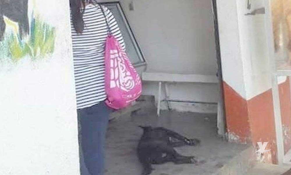 Carnicero acuchilla a perro que ingresó a su negocio en busca de comida