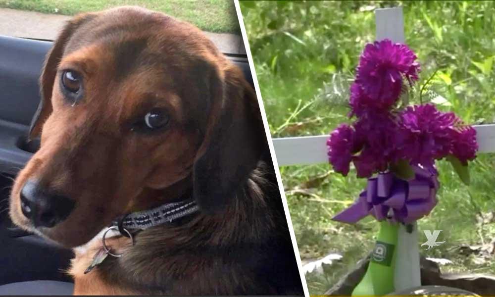 Familia pide justicia después de encontrar a su perrito colgado en la parte trasera de su casa