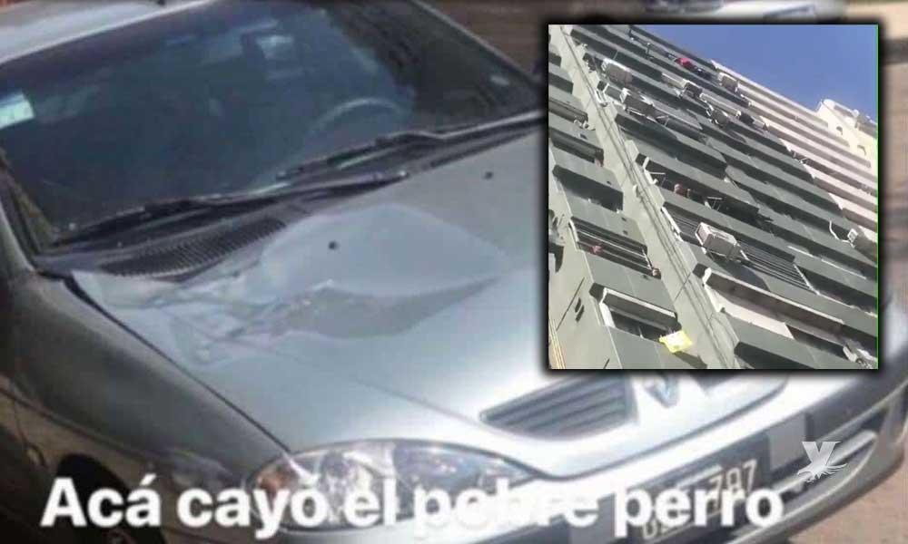 (VIDEO) Perro muere después de que una mujer lo lanzara desde el quinto piso