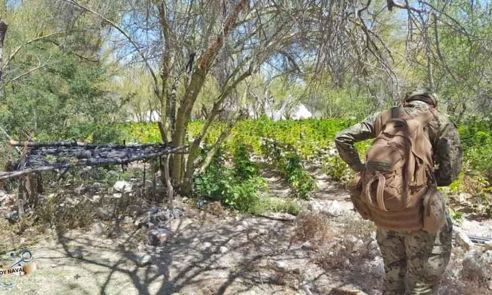 SEDENA descubre dos plantíos de marihuana en San Felipe mientras buscaban a una alpinista desaparecida
