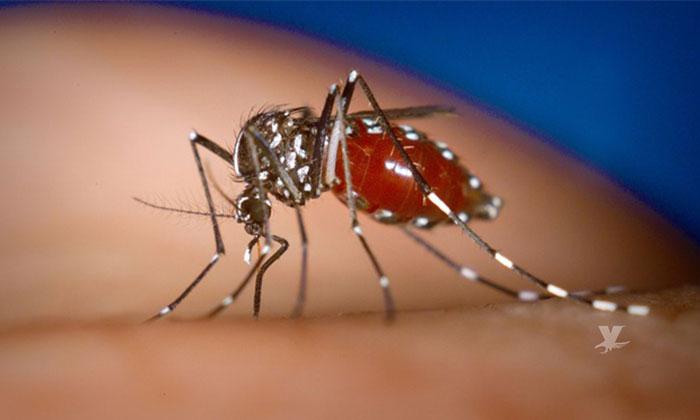 Confirman criaderos del insecto portador de la malaria en Baja California