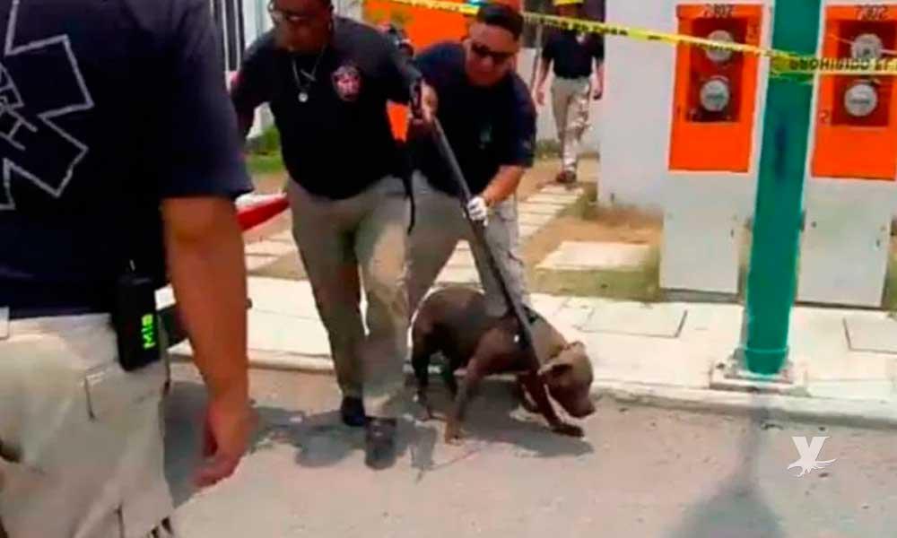 Niña fue asesinada en el patio de la casa por su perro pitbull