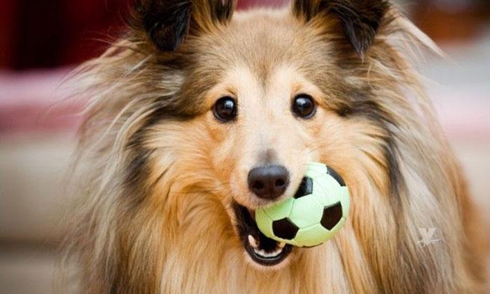 Se descubre virus en perros que puede contagiar a las personas
