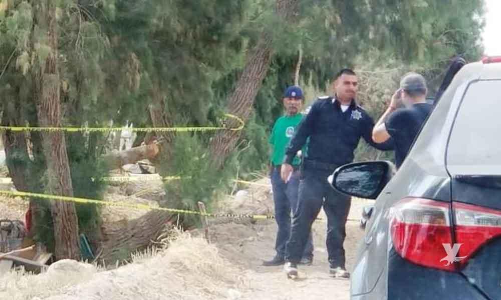 Hombre se suicida colgándose de un árbol en Mexicali