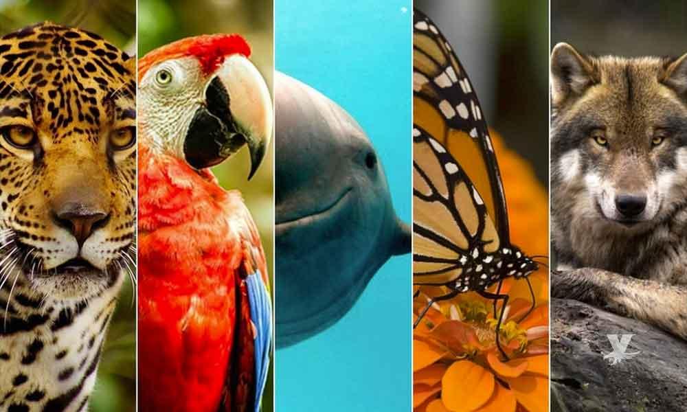 México es el país que tiene más animales en peligro de extinción a nivel mundial