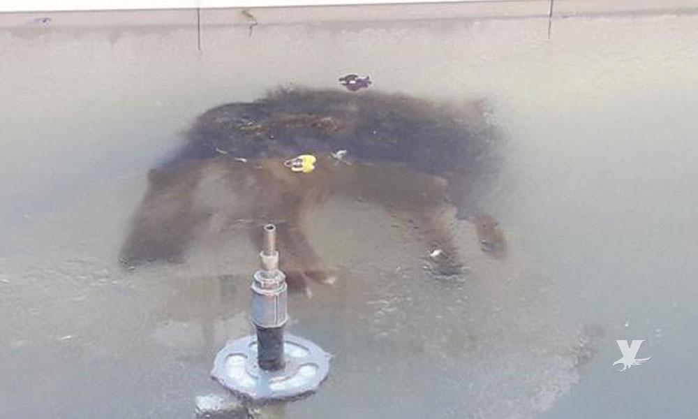 Perro murió congelado en una fuente debido a las bajas temperaturas