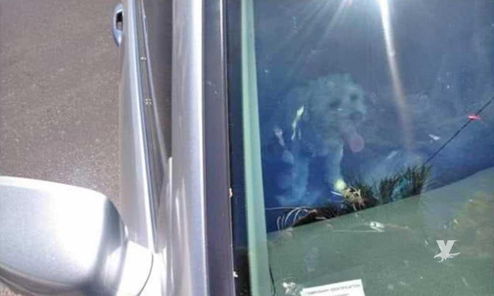 (VIDEO) Mujer encerró a perro en el carro bajo el sol de Mexicali mientras ella estaba en una clínica de belleza