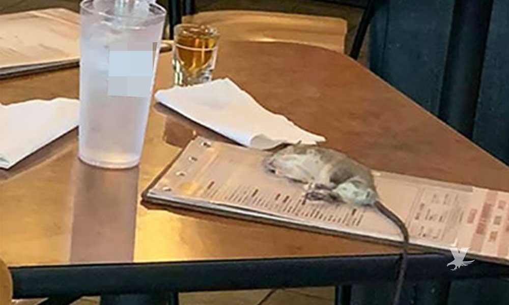 Enorme rata cae desde el techo sobre la mesa de conocido 'restaurante de alitas'