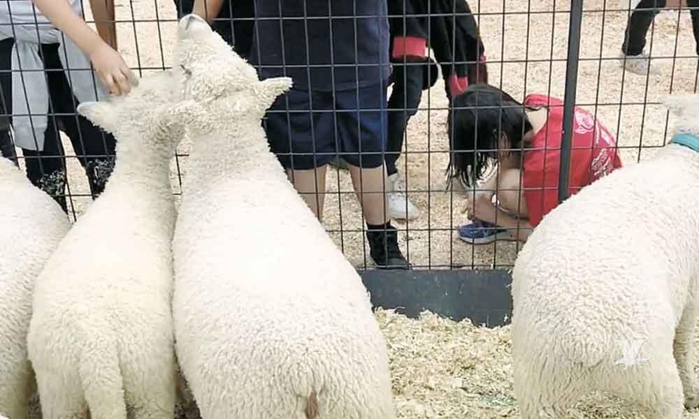 Dos más, son ya 6 casos de menores infectados por  E.coli en la Feria del Condado de San Diego