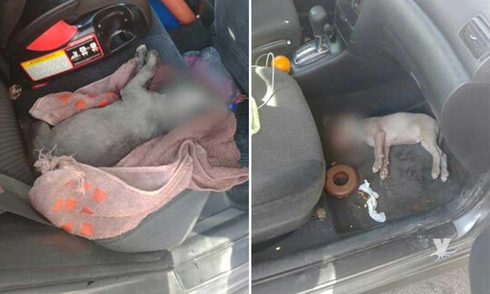 Detienen en Mexicali a mujer que dejó dos perros encerrados en un auto y murieron debido al calor