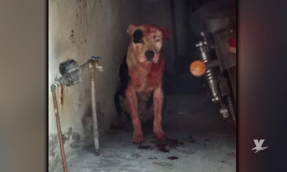 Perro de la raza Pitbull atacó y mató a niño de 1 año