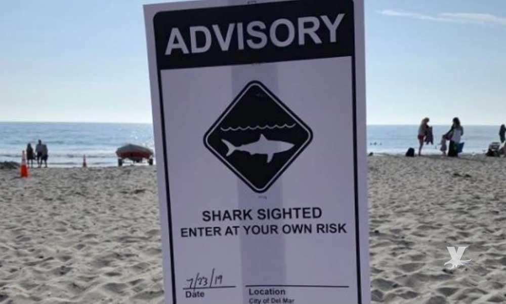 Autoridades advierten de avistamiento de tiburones en playas de San Diego