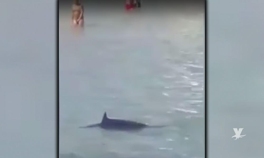 (VIDEO) Entre risas turistas matan a pedradas a un pez espada