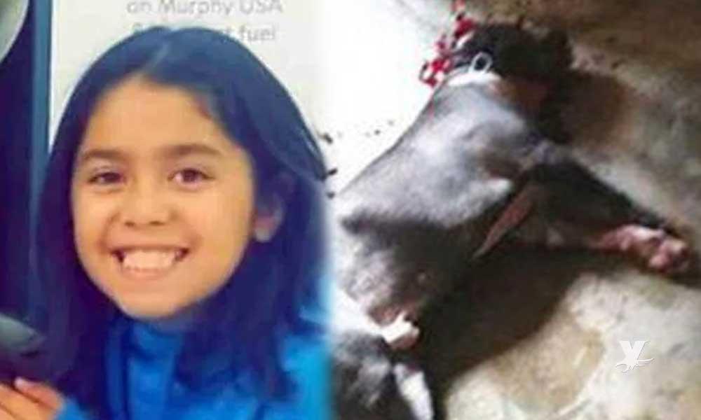 Muere niña atacada por 3 perros pitbull mientras paseaba en su bicicleta